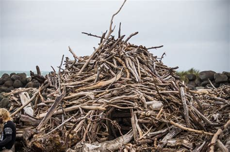 things out of driftwood fort awesome is no more council dismantles new plymouth beach driftwood hut deemed safety risk