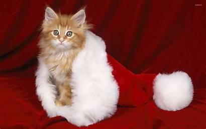 Santa Hat Kitten Orange Cat Animals Animal
