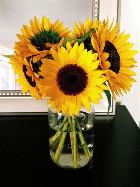 vase  sunflowers pictures   images