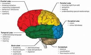 Diagram Of The Brain Labeled