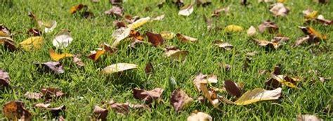 cuisiner les feuilles de betteraves rouges novembre que faire au jardin