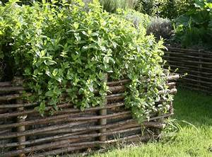 Variété De Menthe : plantes aromatiques cultiver des vari t s de menthe ~ Melissatoandfro.com Idées de Décoration