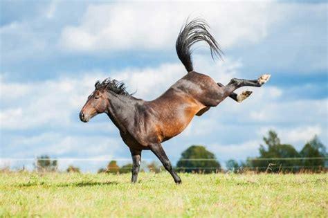 wie sie gallen beim pferd mit schuesslersalzen behandeln