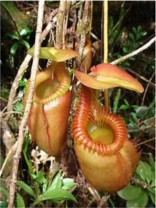 Unusual Rain Forest Animals | Rare Plants In The ...