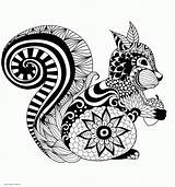 Coloring Adult Squirrel Adults Animal Printable Sheet Colouring Animals Sheets sketch template