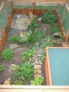 Great tortoise set up with roof and pen | Terrarium ...