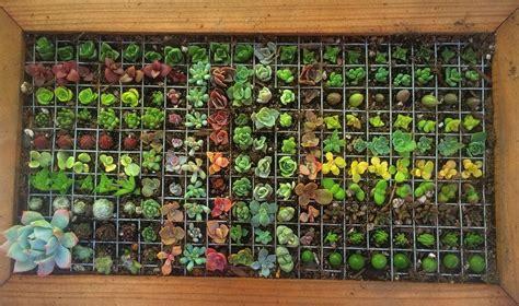 archives gardening succs