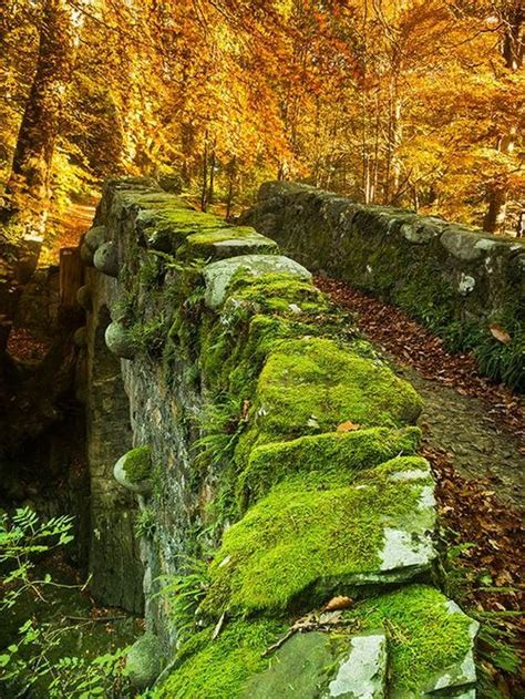 foto de 832 best Moss Gardens images on Pinterest Beautiful