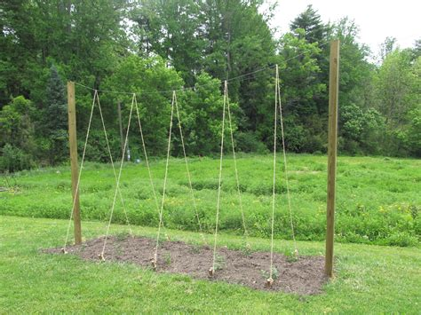 Hops Trellis Design by Projects This Farmhouse