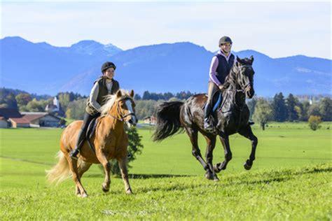 muskelaufbau beim pferd durch spezialfutter und training