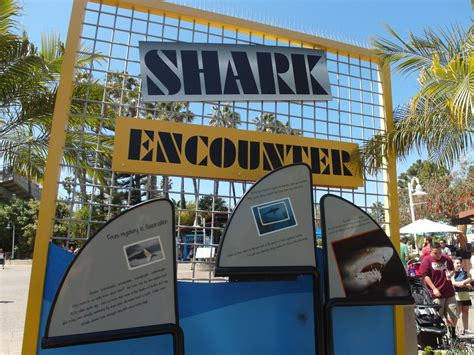 Seaworld San Diego Have Killer Whale Time