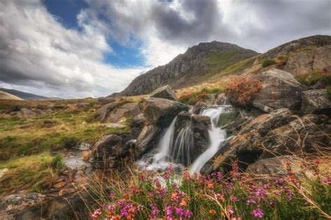 Download 600x1024 Stream, Rocks, Mountain, Clouds, Flowers