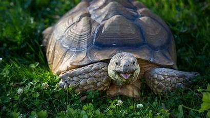Turtle Wallpapers Backgrounds Bing Resolution Pixelstalk 1080