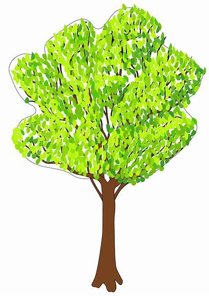 Bare Tree Clipart Brown Summer Outline Cliparts
