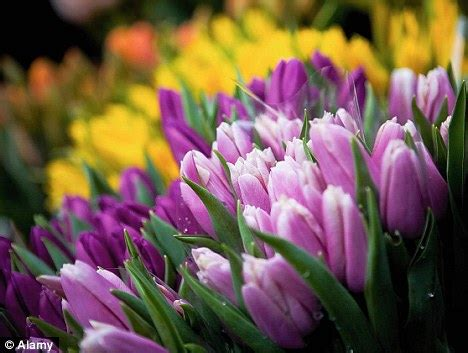 starts here now is the time to plant bulbs