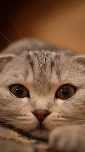 Cat iPhone Wallpapers | PixelsTalk.Net