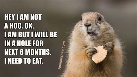 groundhogs eat    thought