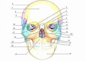 Skull Labeling Worksheet Worksheets Free Printable Anatomy