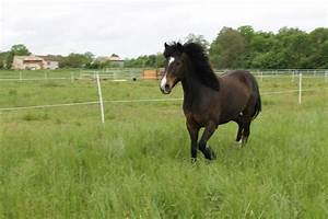6 Annonce Toulouse : chevaux vendre toulouse annonces questres toulouse 31 annonces toulouse annuaire 2017 ~ Maxctalentgroup.com Avis de Voitures