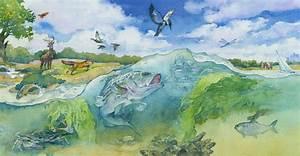 The Bay Ecosystem - Chesapeake Bay Program