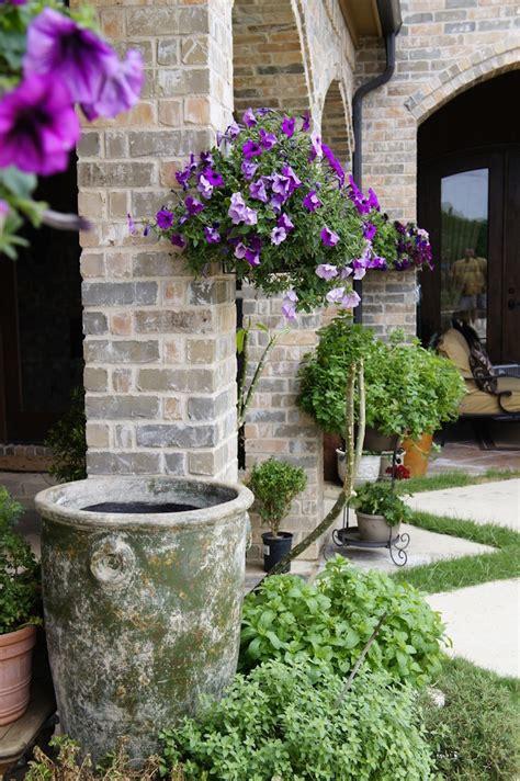 plante anti moustique exterieur plante anti moustique exterieur 28 images les plantes anti moustiques des insecticides