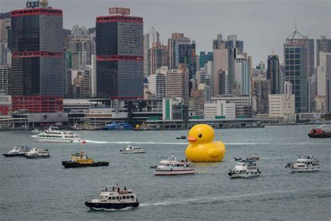 port de hong kong en images un canard dans le port de hong kong