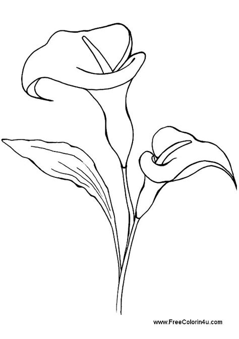 Calla lily free printable coloring book page. Calla lily picture Print as portrait. in 2020