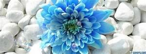 flowers blue rocks Facebook Cover timeline photo banner for fb