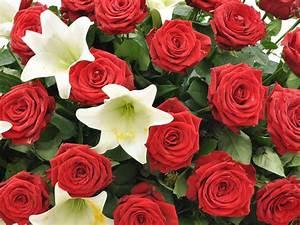 1 Rote Rose Bedeutung : sarggesteck rote rosen und weisse lilien f tschl blumen wien g rtnerei wien ~ Whattoseeinmadrid.com Haus und Dekorationen
