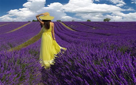 girl  lavender field hd wallpaper background image