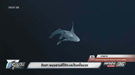 ฮือฮา พบฉลามผีใต้ทะเลเป็นครั้งแรก : PPTVHD36
