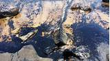Images of Oil Spill
