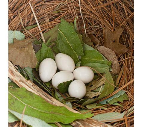 purple martin nesting