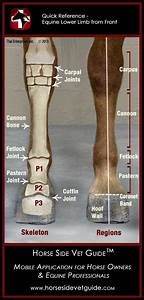 56 Best Anatomy And Conformation Images On Pinterest