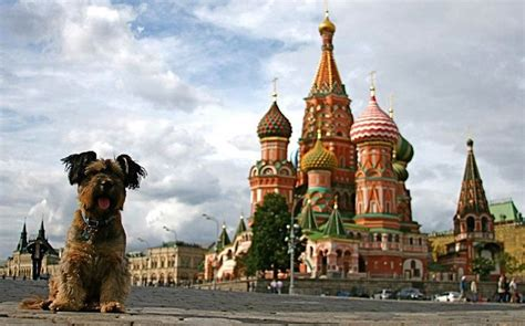 cute adventures  oscar  globetrotting dog