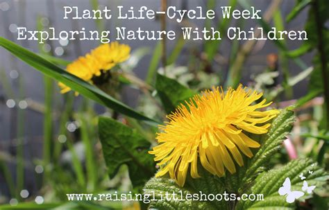 plant life cycle week exploring nature children