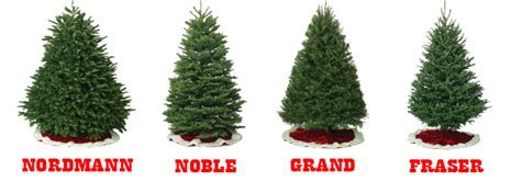 christmas tree types christmas decore