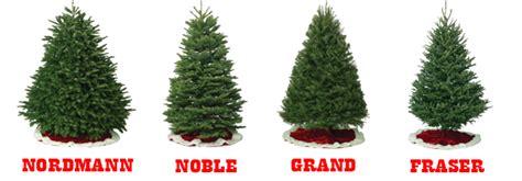 Welcome To Little Elfs Christmas Trees  Little Elfs