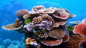 Top 10 Most Beautiful Coral Reefs In The World - Top Ten ...