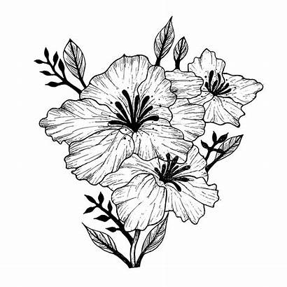 Flowers Line Flower Drawing Drawings Tropical Plant
