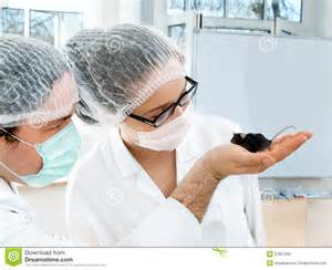 scientists observe transgenic mouse stock photo image 27857000