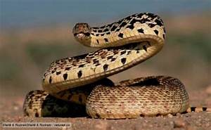 10 Interesting Snake Facts | My Interesting Facts