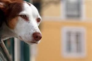 Hundehaltung Mietwohnung 2017 : hundehaltung ~ Lizthompson.info Haus und Dekorationen