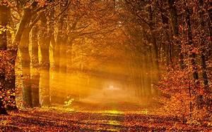 Sunset Autumn Background For Wallpaper 123 #1570 Wallpaper ...