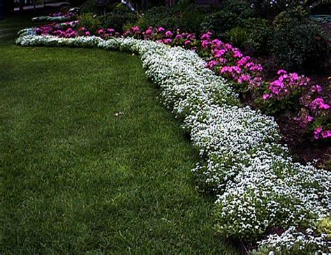 plants for patio borders perennial border edging plants plant used all along the edge of a bed to frame the plants