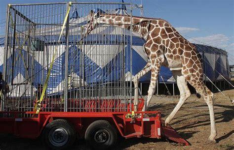 circuses animal blawg