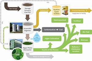 Diagram That Outlines The Microalgae Water Treatment