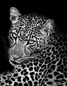 Photo Sur Plexiglas : photo sur plexiglas leopard in black and white nikkel ~ Teatrodelosmanantiales.com Idées de Décoration