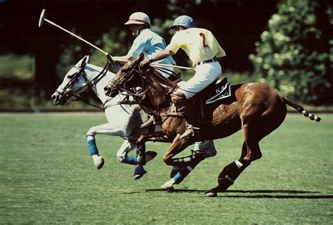 fragen zu polo reiten pferde lernen
