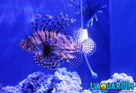 l aquarium in playa plunges visitors the sea